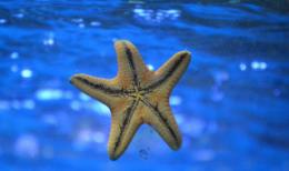 MISJA STARFISH 2030: ODBUDUJMY NASZE ZASOBY WODNE I OCEANY